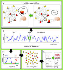 theory and simulation in neuroscience science