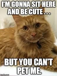 Cat Meme Maker - ceiling cat meme generator www energywarden net