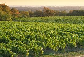 Vineyard Bench Hidden Bench Vineyards And Winery Visit Niagara Canada