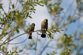 two birds on the branch stock photo image of branch 27373026