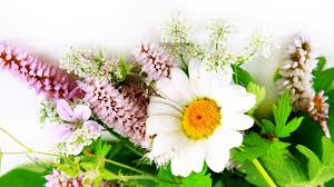 flowers hd wallpaper free download 75 flower images pictures
