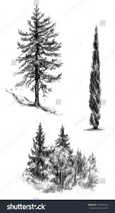 set tree sketches isolated sketch cypress stock illustration