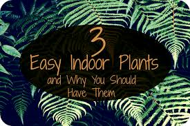 3 easy indoor plants and why you should have them u2022 heartful habits