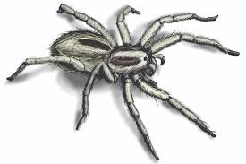 simple how to get rid of wolf spiders in basement wonderful