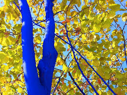 the trees paint them blue southern living