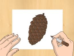how to draw a pinecone 6 steps with pictures wikihow