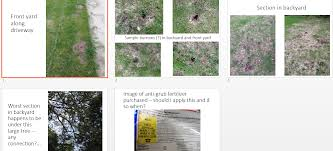 question on lawn pest moles grubs ask an expert