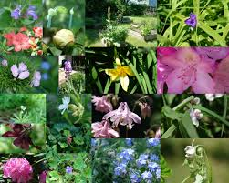 Pictures Of Garden Flowers by Flowers Lab Cat
