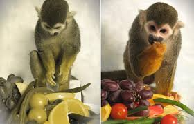 Gene Therapy For Blindness Gene Therapy Cures Color Blind Monkeys Wired
