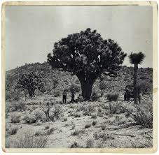 mojave desert lighthouse restoration project joshua tree by kurt