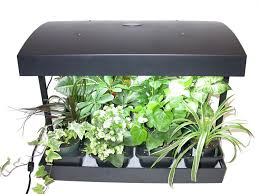 winter indoor herb garden lighted herb bookcase amazoncom click
