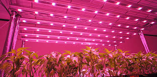 Plant Lights How To Choose by How To Select The Best Grow Light For Indoor Growing Led Grow