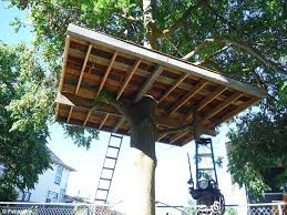 three house washington homeowner fighting to keep treehouse daily mail