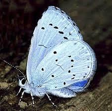 butterflies u2013 waterford wildlife