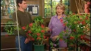 video planting honeysuckle vines martha stewart