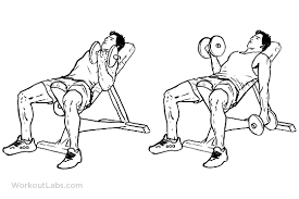 Bench Bicep Curls Seated Alternating Incline Bench Dumbbell Curls Workoutlabs