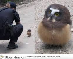 Funny Owl Meme - baby owl faces off with deputy in boulder funny pictures quotes