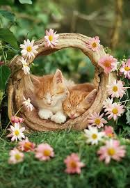 Daisy The Flower - 741 best smell the flowers images on pinterest animals kitty