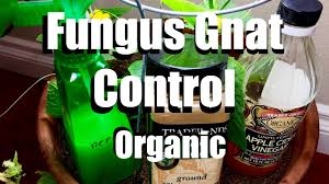 how to control fungus gnats organically growing your indoor
