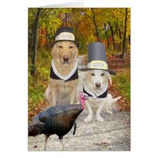 thanksgiving cards invitations greeting photo cards