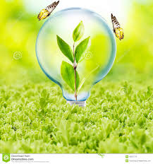 light bulb with plant and butterfly stock photo image 48597776