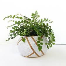 white ceramic planter pottery for succulents cacti house
