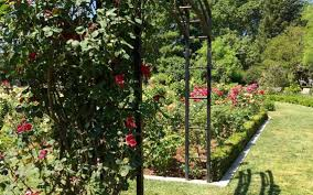 trellis theft at mckinley park rose garden raises security