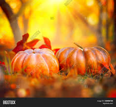 autumn pumpkins image photo bigstock
