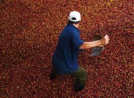 cual fue el aumento en colombia para los pensionados en el 2016 de cultivos de café en colombia