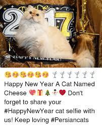 Happy New Year Cat Meme - alalaki happy new year a cat named cheese