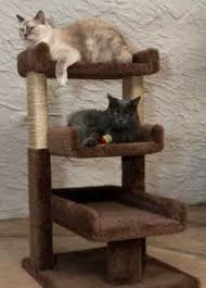 best cat trees for large cats cat trees for large cats top 6 list