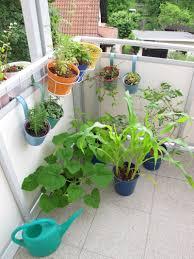 gem se pflanzen balkon gemüseanbau auf balkon standort töpfe sorten und co