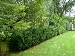 native plants for hedging landscaping in new york with hedges around your property u2013 winged