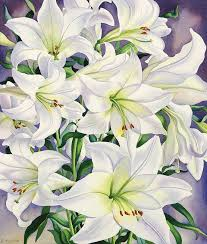 white lillies white lilies painting by christopher ryland