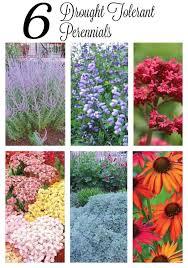 Plant Flower Garden - top 25 best sun garden ideas on pinterest full sun garden full