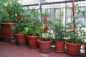 gem se pflanzen balkon obst und gemüse anbauen auf dem balkon für anfänger