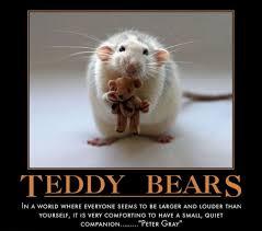 Teddy Bear Meme - bear meme teddy bear memes 2 hahaha moments pinterest