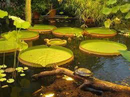 Botanical Gardens In Birmingham Al Garden Botanical Gardens Birmingham Al Luxury House In