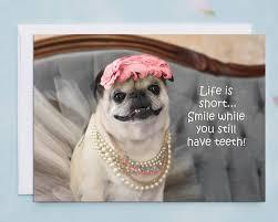 birthday cards smile while you still teeth pug