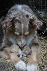 325 best bunny love images on pinterest animals funny bunnies