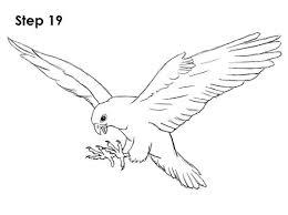 coloring graceful easy draw falcon bird 19 coloring