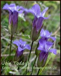 native ohio plants virtual archives 1983 1989 u2014 the native plant society of