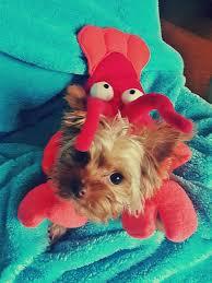 Dog Halloween Costumes 10 Cutest Dog Halloween Costumes Ariel U0026 Sebastian