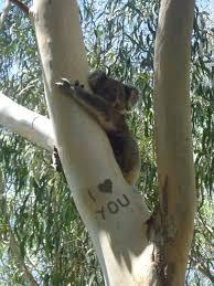 koala free little words