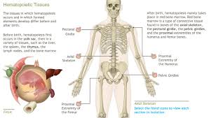 Anatomy And Physiology Place A D A M Ondemand The Blood Anatomy And Physiology