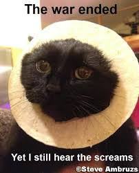 Cat Breading Meme - breading cats meme takes off page 3 neogaf