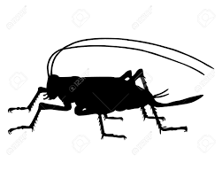 cricket silhouette royalty free cliparts vectors and stock