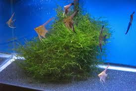 fishy review aquarium reviews and how tos
