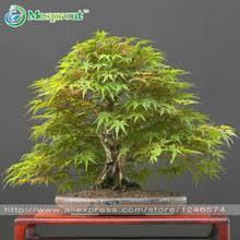 Indoor Plant For Office Desk Popular Maple Office Desk Buy Cheap Maple Office Desk Lots From