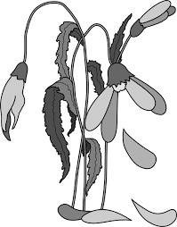 dead flower coloring page wilted flower clip art at clker com vector clip art online